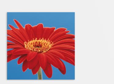 Ihr Foto auf Alu Dibond™ im quadratischen Format 20x20 cm selbst gestalten